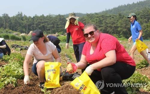 [#꿀잼여행] 충청권: 땅속 보물을 찾아라…서산·당진·괴산 웰빙 감자축제