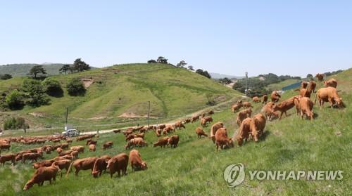 평창군, 대관령 일대 10만여㎡에 숙박 등 관광휴양시설