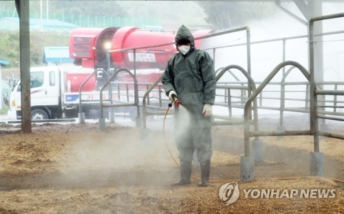A quarantine official vaccinates a cattle market in Gongju, 160 kilometers south of Seoul, on April 24, 2018. (Yonhap)