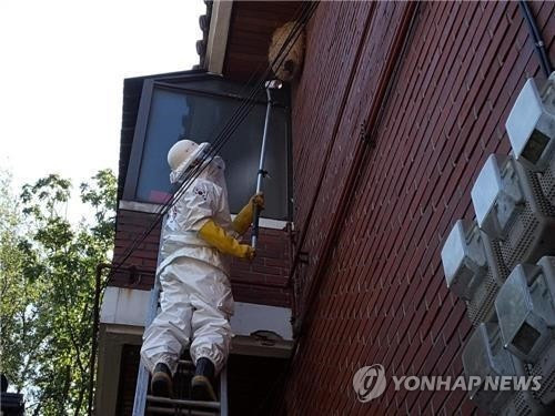 This provided photo shows a rescuer removing a hornet nest on the wall of a house. (Yonhap)