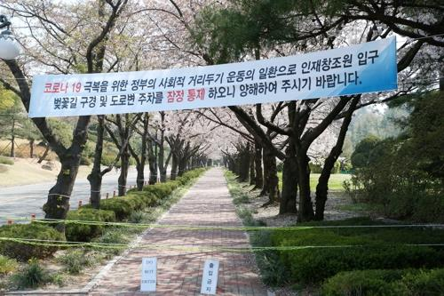 Streets of Seoul filled with cherry blossom are closed on April 5, 2020, as part of the government's intensive social distancing campaign to stop the spread of cluster cases of COVID-19. The government on Saturday decided to extend its social distancing campaign for another two weeks until April 19. (Yonhap)