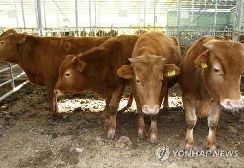 Number of beef cattle in S. Korea gains 3.9 pct in Q4 - 1