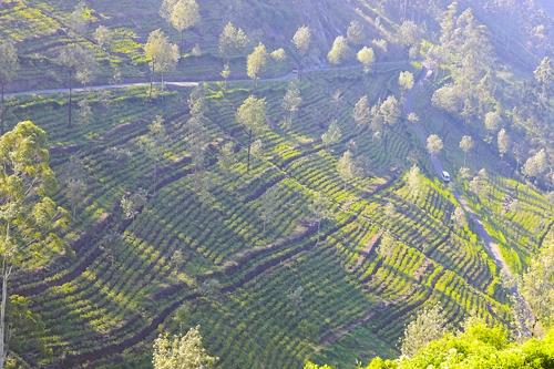 립톤의 창업자인 영국의 토마스 립톤이 설립했던 차 농장을 하늘에서 본 모습 [사진/성연재 기자]