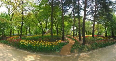 서울숲 튤립정원 [서울숲 컨서번시 제공]