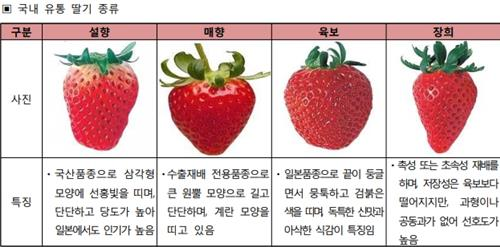 국내 유통 딸기의 종류. 왼쪽부터 국산 품종인 설향, 매향과 일본 품종 육보, 장희.