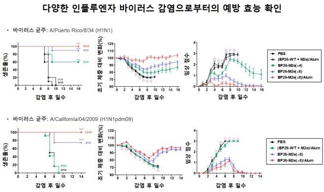 인플루엔자 바이러스 감염 동물 실험 결과 그래프