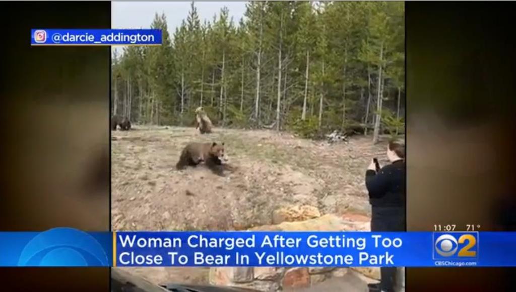 미국 옐로스톤 국립공원에서 불곰에 접급해 사진찍은 여성 연방검찰에 기소 [시카고CBS방송 화면 캡처 / 재판매 및 D B금지]