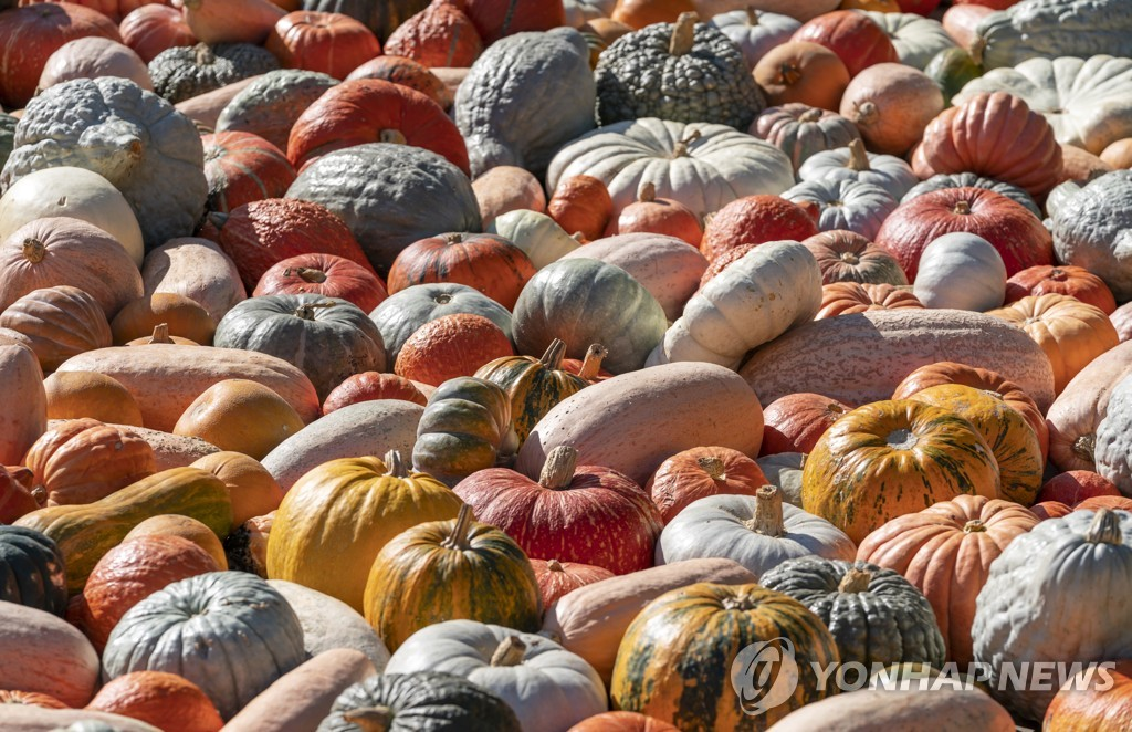 GERMANY PUMPKIN FESTIVAL