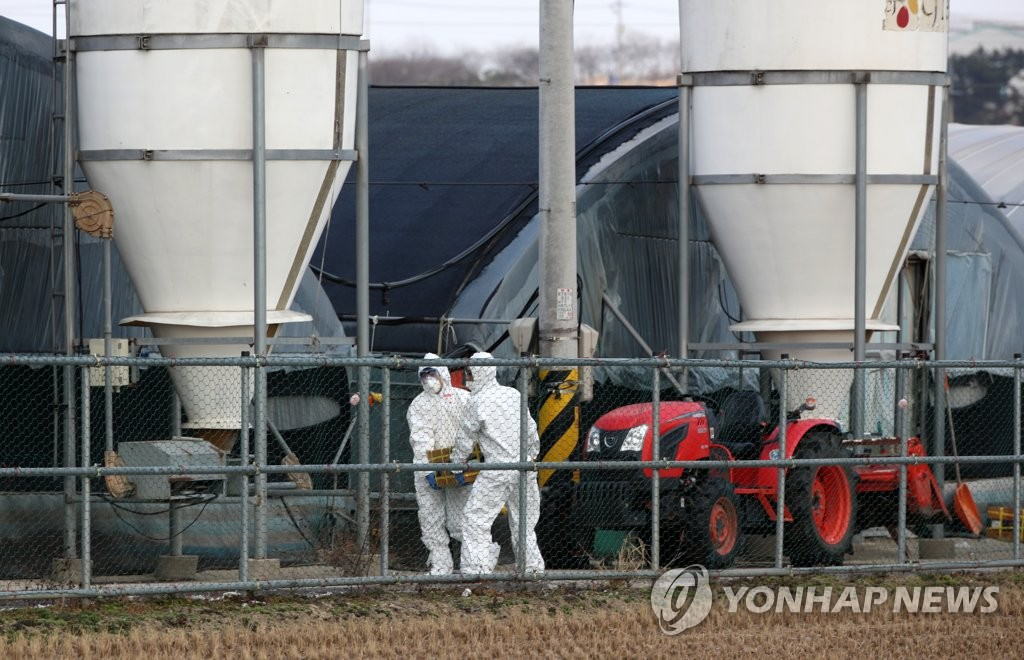 Quarantine officials prepare to cull ducks at a farm in Naju, 355 kilometers south of Seoul, on Dec. 8, 2020. (Yonhap)